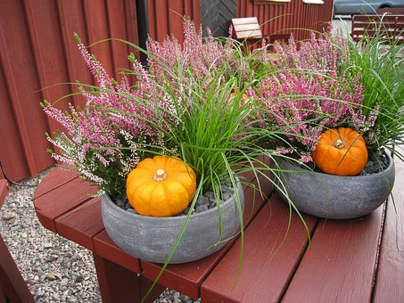 Autumn Arrangement, Pumpkins, Seedlings, Grass, Heather