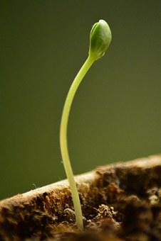 Sapling, New, Growth, Nature, Development, Green, Life