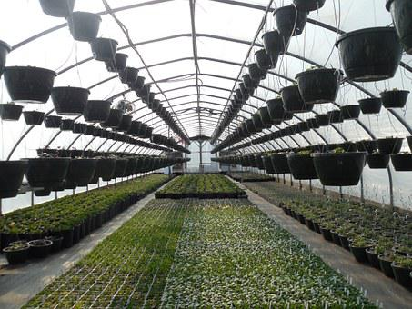 Greenhouse, Plants, Plant, Gardening, Growing, Organic