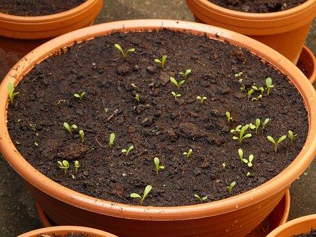 Plant, Seed, Seedling, Pot, Engine, Flower, Flowerpot