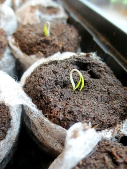 Seedling, Seed, Plant, Growth, Green, Spring