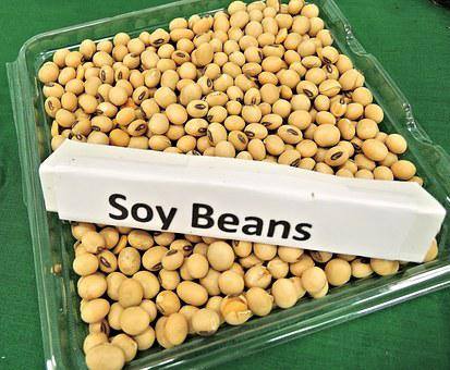 Soy Beans, Animal Feed, Soy Oil, Biodiesel Fuel