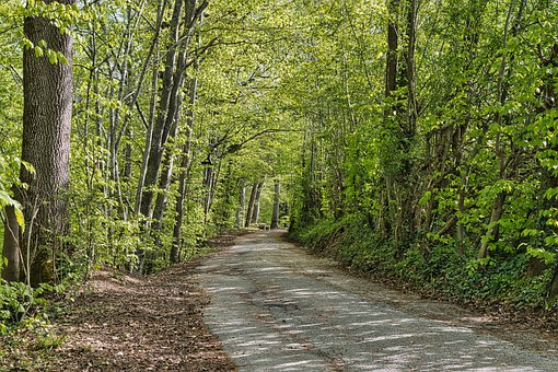 Path, Trail, Lane, Trees, Forest, Avenue, Spring
