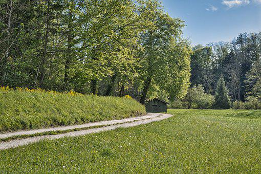 Forest, Path, Trail, Lane, Hut, Barn, Spring, Trees