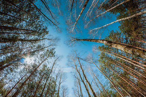 Forest, Tree, Nature, Ecology, Magic, Mood, Atmosphere