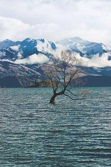 Tree, Wanaka Tree, Wanaka, Nature, Mountain, Mountains