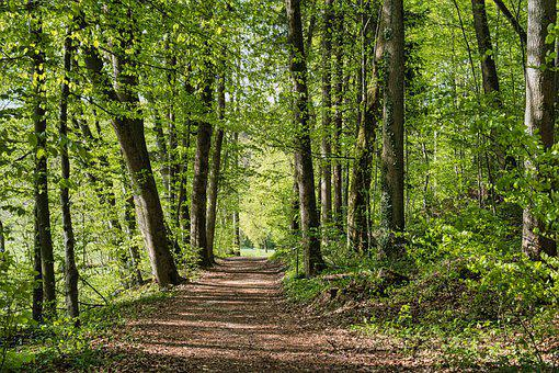Forest, Path, Trail, Spring, Trees, Green, Season