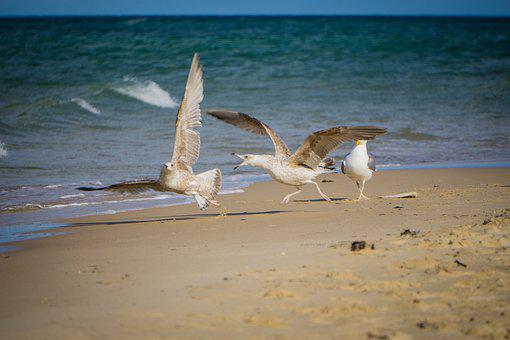 Gulls, Birds, Sea, Waves, Beach, Plumage