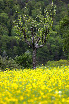 Tree, Orchard, Meadow, Flowers, Fruit Tree, Apple Tree