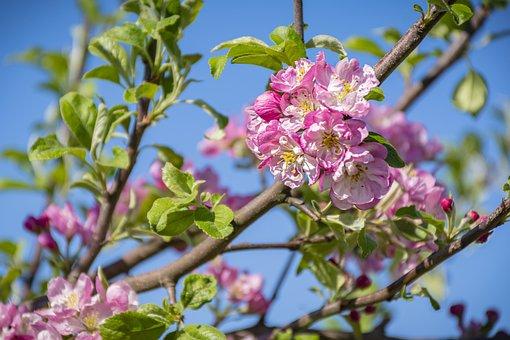 Flowers, Petals, Buds, Tree, Spring, Blossom, Bloom