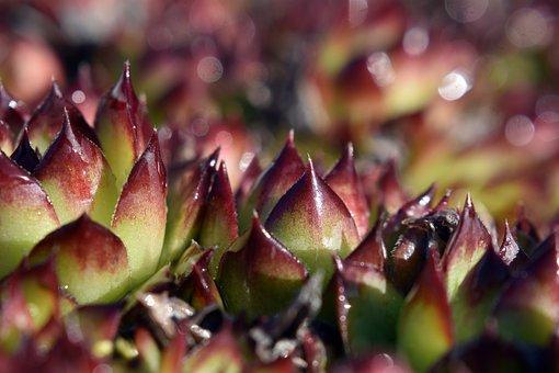 Cactus, Spikes, Drops, Flower, Sharp, Green, Garden
