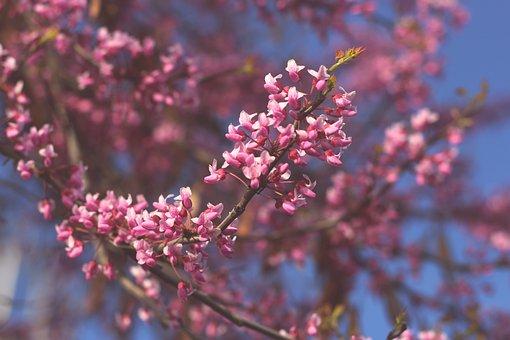 Flowers, Branch, Tree, Pink Flowers, Bloom, Plant