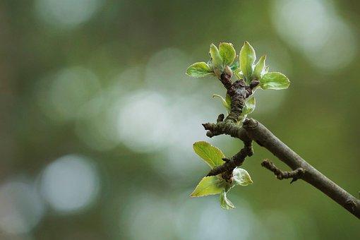 Apple Tree, Fruit, Tree, Apple, Blossom, Bloom, Harvest