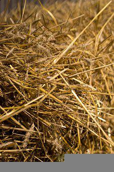 Straw, Barley, Harvest, Threshing, Cereals, Grain