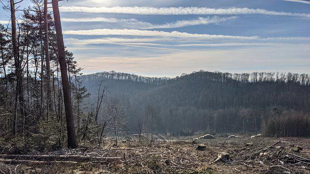 Trees, Mountains, Forest, Woods, Woodlands, Landscape