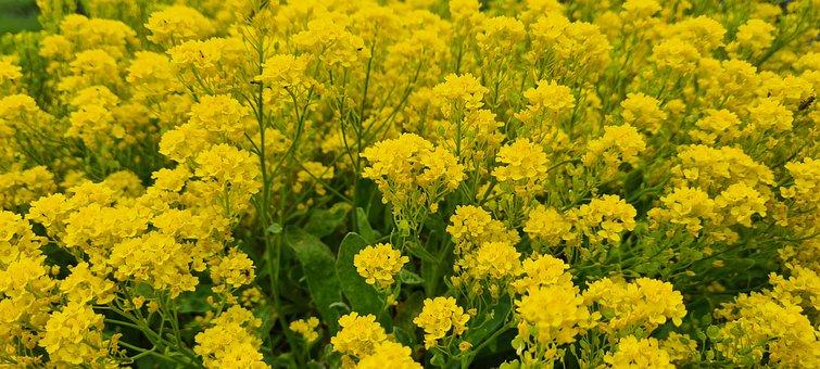 Flowers, Meadow, Nature, Flower Meadow, Yellow, Idyll