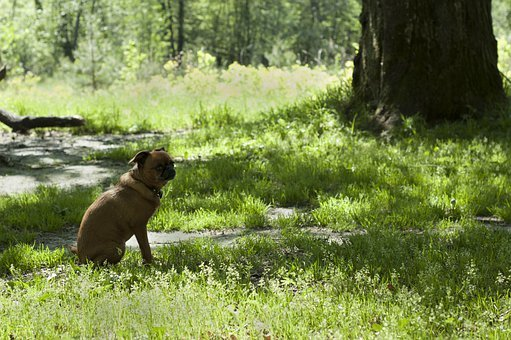 Dog, Pet, Grass, Path, Forest, Tree, Sitting, Waiting