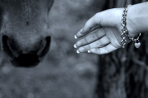Horse, Hand, Bracelet, Horse Head, Stroke, Ride