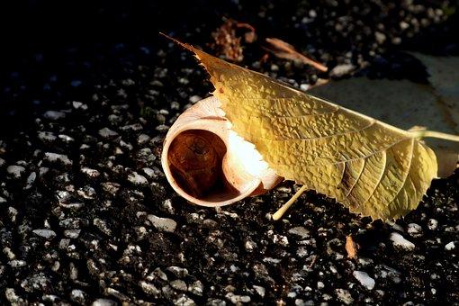 Shell, Leaf, Yellow, Tar, Asphalt, Snail, Animal