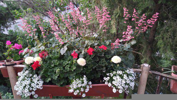 Flowers, Potted Plants, Balcony Chest, Fire Flower
