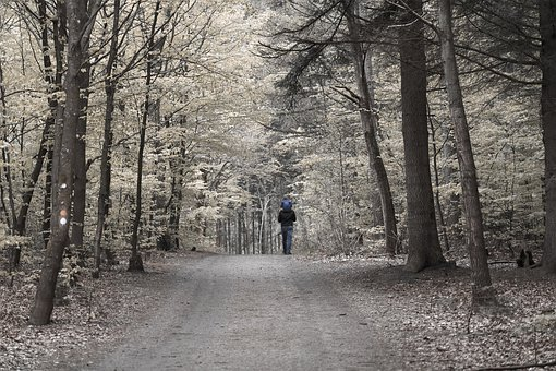 Man, Child, Hiking, Road, Pathway, Forest, Nature