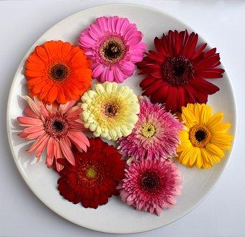 Gerbera, Flower, Petals, Foliage, Color, Daisy, Garden