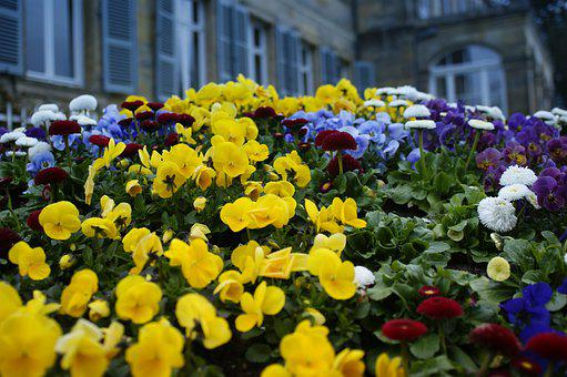 Flowers, Colorful, Garden