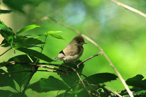 Bird, Animal, Branch, Perched, Passerine, Wildlife