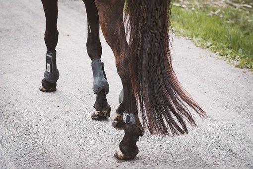 Horse, Pony, Legs, Feet, Step, Ride, Animal