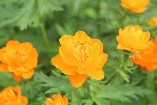 Flowers, Orange, Petals, Orange Flowers, Orange Petals