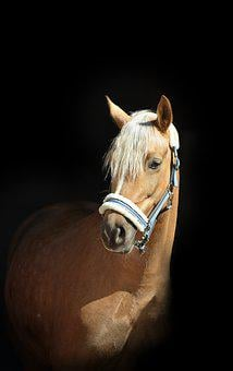 Horse, Black, Horses, Ride, Animals, Mane, Western