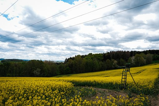Field, Oilseed Rape, Trees, Road, Forest Path, Forest