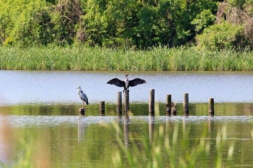 Birds, Gray Heron, Stork, Oriental Stork