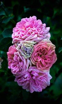 Flowers, Roses, Petals, Bouquet, Colorful, Fragrance