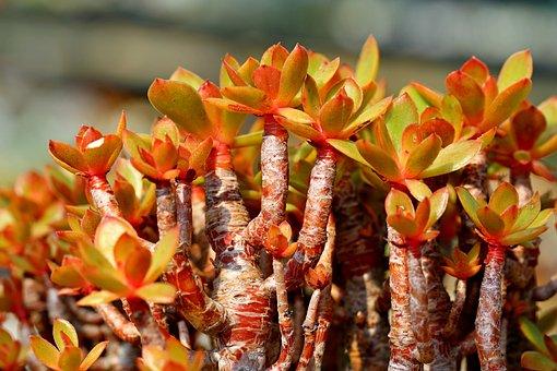 Succulent, Fleshy, Plant, Cactus, Succulent Plant