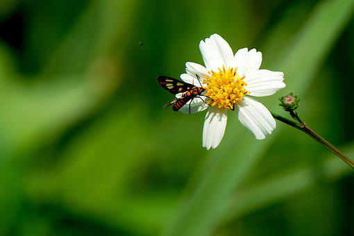 Flower, Insect, Bug, Wildflower, Nature, Flora, Insects