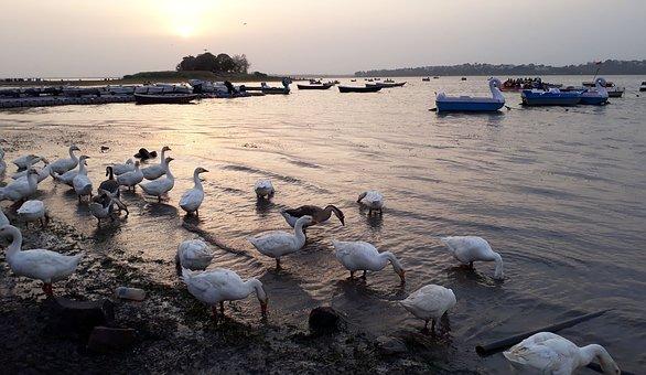 Animal, Animal Photography, Animals Avian