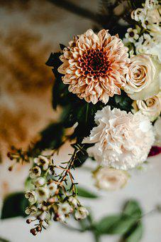 Carnations, Flowers, Plants, Bloom, Blossom, Bouquet