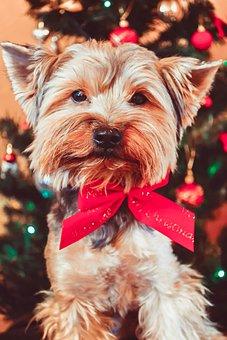 Dog, Pet, Puppy, Furry, Canine, Domestic Dog, Portrait