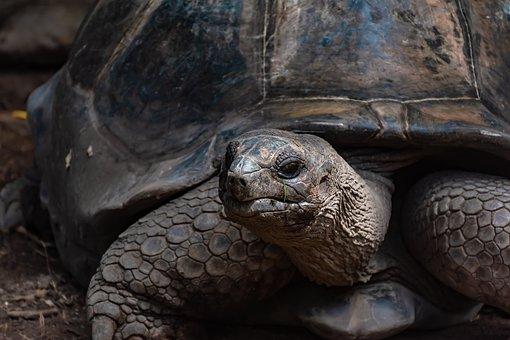 Turtle, Animal, Reptile, Wildlife, Aquatic, Beach