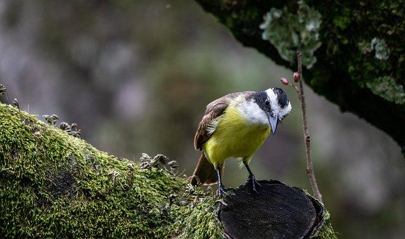 Ave, Branch, Plumage, Peak, Ornithology, Tree
