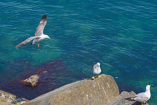 Gull, Bird, Flying, Wings, Beach, Fly, Animal, Wildlife