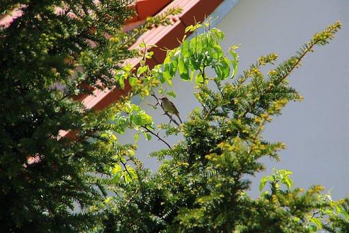 Sparrow, Branch, Spring, Bird, Sperling, Animal, Bush