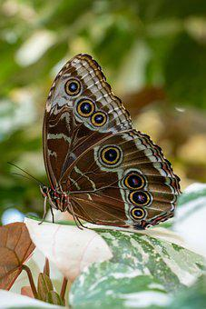 Butterfly, Pollination, Flower, Pollinate, Wings