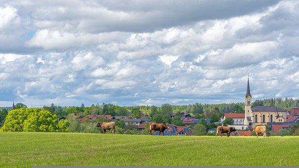 Cows, Houses, Church, Village, Cattle, Meadow, Clouds