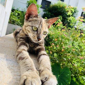 Cat, Stretching, Pet, Feline, Kitty, Kitten, Mammal