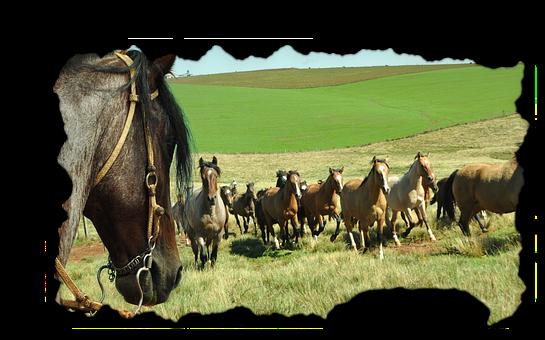 Horse, Herd, Equine, Animals, Field, Farm, Landscape