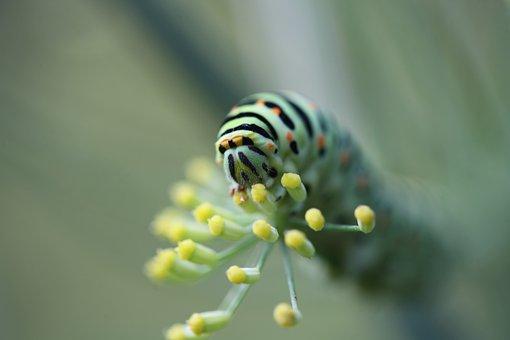 Caterpillar, Animals, Larva, Insects, Nature, Plants