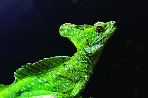 Iguana, Reptile, Lizard, Animals, Dragon, Exotic