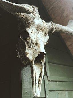 Deer, Hunting, Skull, Horns, Nature, Wild Forest